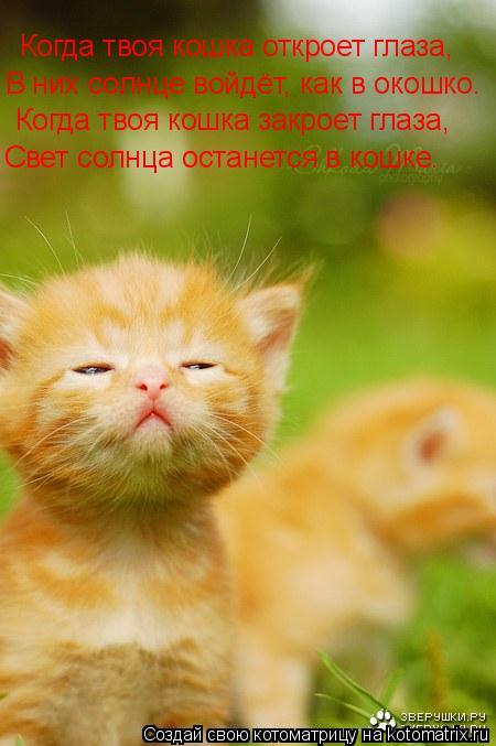 Котоматрица: Когда твоя кошка откроет глаза, В них солнце войдёт, как в окошко. Когда твоя кошка закроет глаза, Свет солнца останется в кошке.
