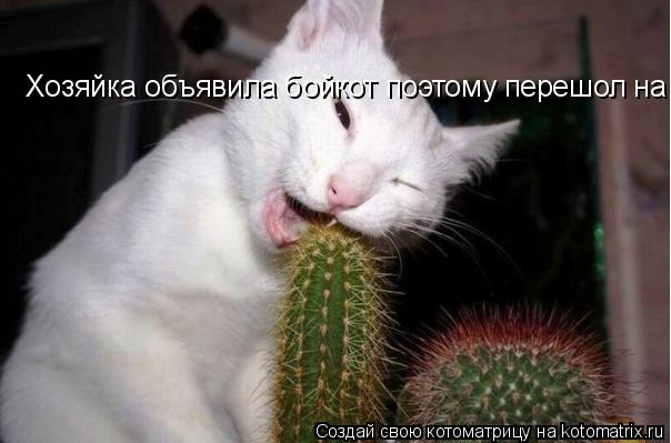 Котоматрица: Хозяйка объявила бойкот поэтому перешол на кактусы