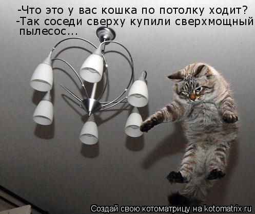 Котоматрица: -Что это у вас кошка по потолку ходит? -Так соседи сверху купили сверхмощный пылесос...