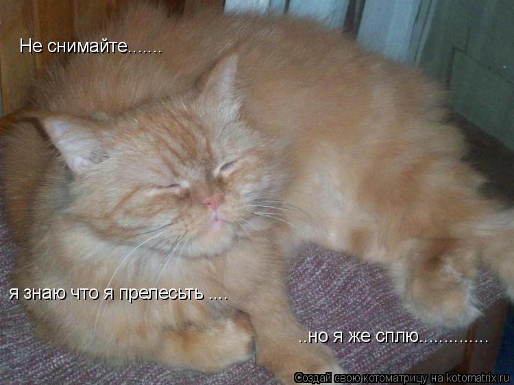 Котоматрица: Не снимайте....... я знаю что я прелесьть .... ..но я же сплю..............