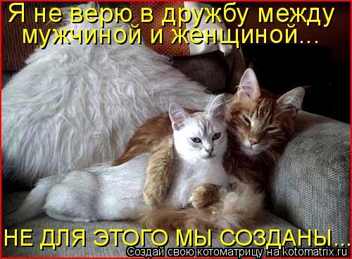Котоматрица: Я не верю в дружбу между мужчиной и женщиной... НЕ ДЛЯ ЭТОГО МЫ СОЗДАНЫ...