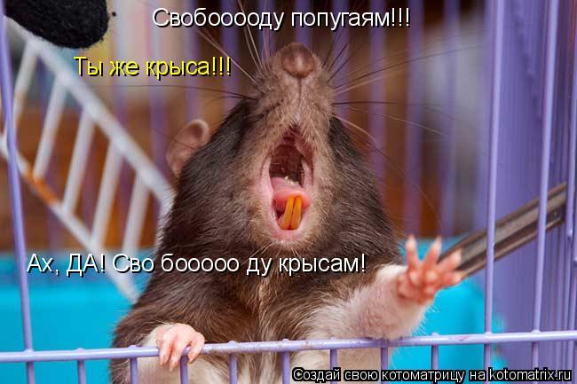 Котоматрица: Свобооооду попугаям!!! Ты же крыса!!! Ах, ДА! Сво бооооо ду крысам!