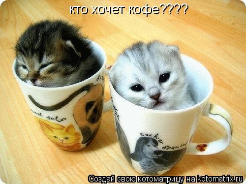 Котоматрица: кто хочет кофе????