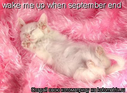 Котоматрица: wake me up when september end