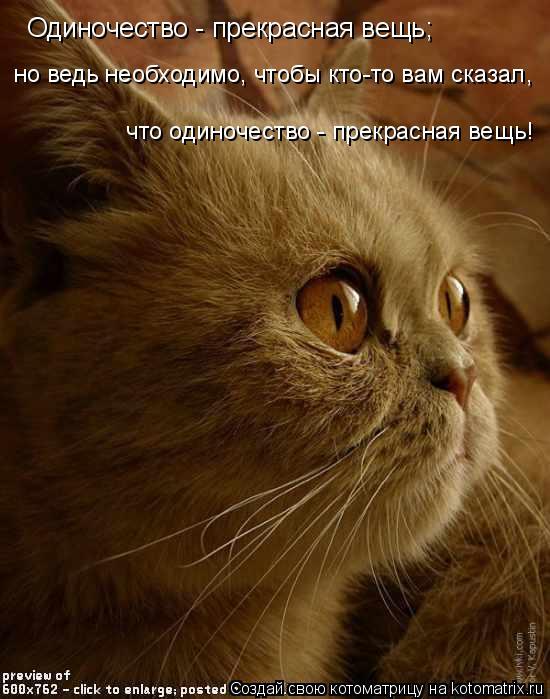 Котоматрица: Одиночество - прекрасная вещь; но ведь необходимо, чтобы кто-то вам сказал,   что одиночество - прекрасная вещь!