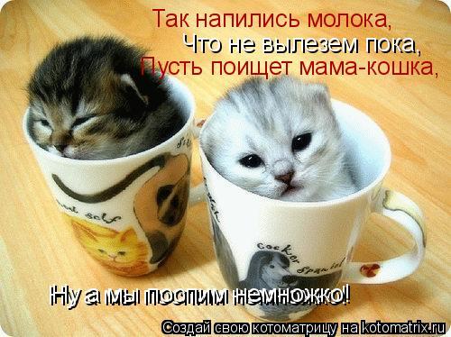 Котоматрица: Так напились молока, Что не вылезем пока, Пусть поищет мама-кошка, Ну а мы поспим немножко! Ну а мы поспим немножко!