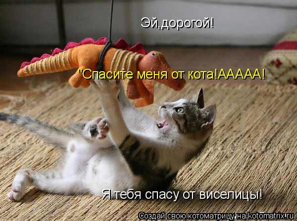 "Котоматрица: Эй,дорогой! Я тебя спасу от виселицы! ""Спасите меня от кота!ААААА!"