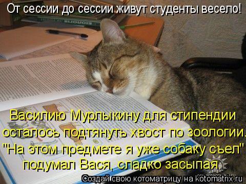 Котоматрица: подумал Вася, сладко засыпая. осталось подтянуть хвост по зоологии.  Василию Мурлыкину для стипендии От сессии до сессии живут студенты вес
