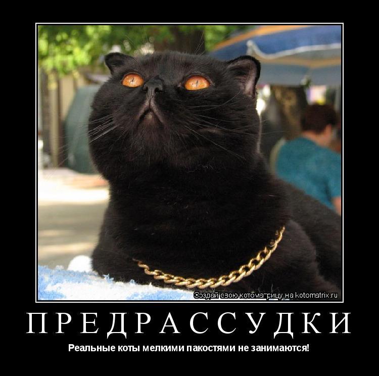 Котоматрица: Предрассудки Реальные коты мелкими пакостями не занимаются!