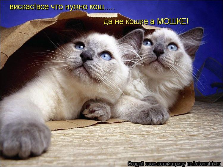 Котоматрица: вискас!все что нужно кош..... да не кошке а МОШКЕ!