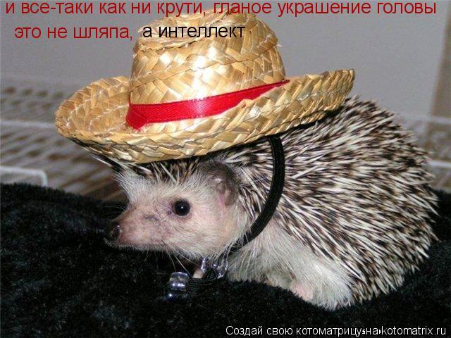 Котоматрица: и все-таки как ни крути, гланое украшение головы  это не шляпа, а интеллект