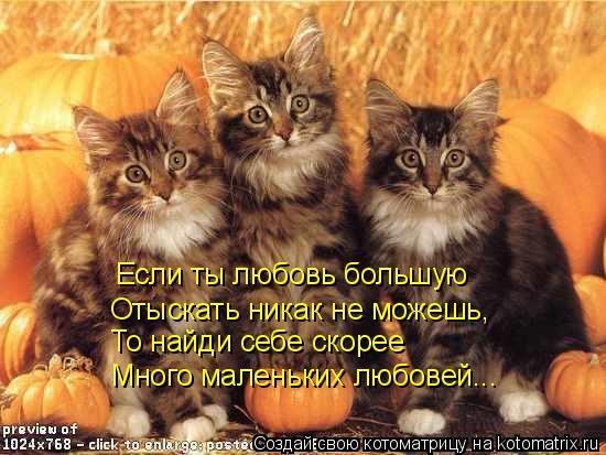 Котоматрица: Если ты любовь большую  Отыскать никак не можешь, То найди себе скорее  Много маленьких любовей...