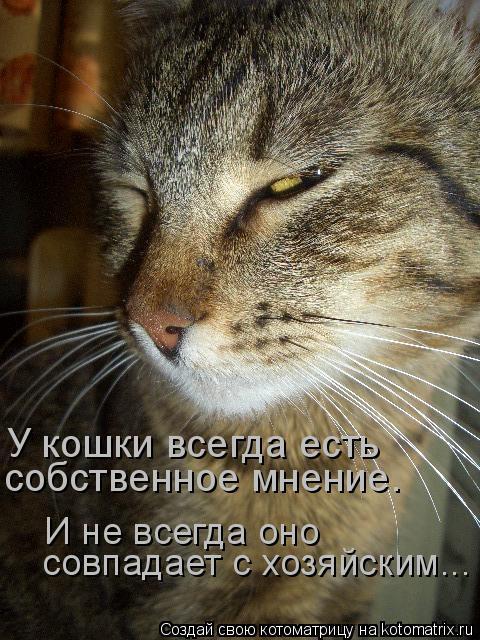Котоматрица: У кошки всегда есть собственное мнение. И не всегда оно совпадает с хозяйским...