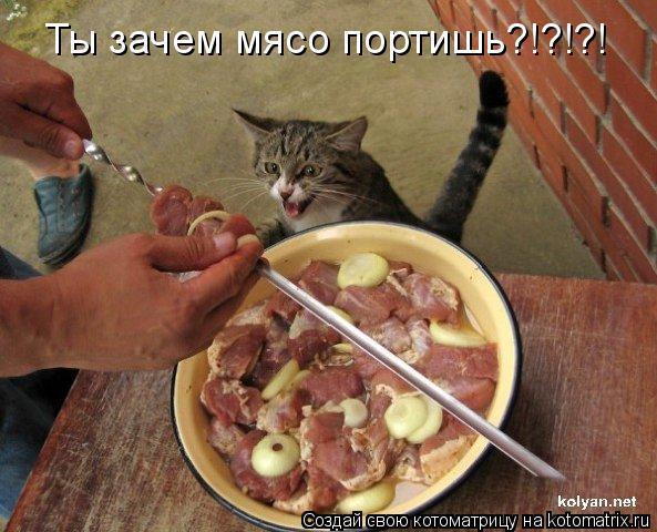 Котоматрица: Ты зачем мясо портишь?!?!?!