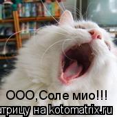 Котоматрица: ООО,Соле мио!!!