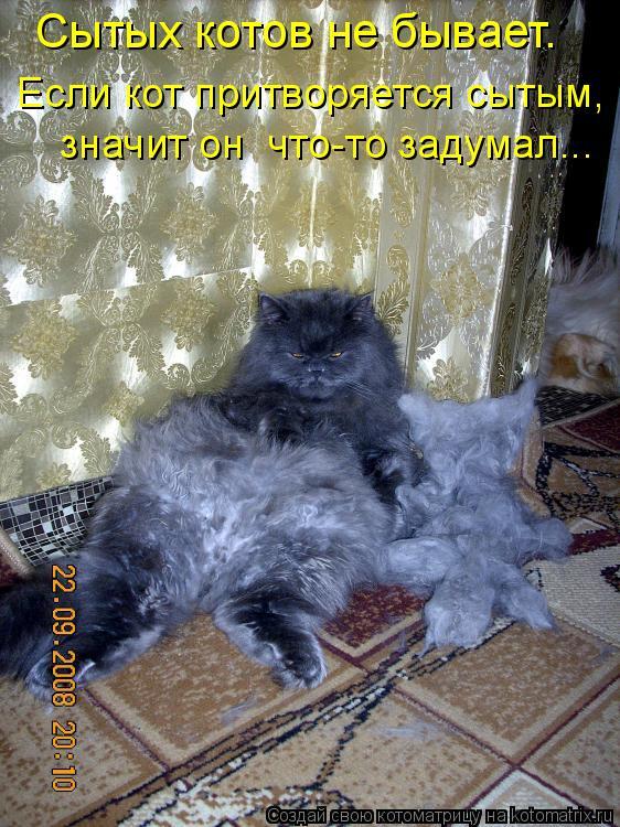 Котоматрица: Если кот притворяется сытым,  значит он  что-то задумал... Сытых котов не бывает.