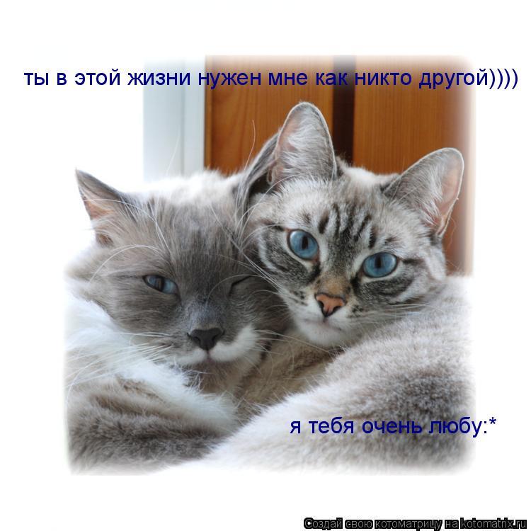 Котоматрица: ты в этой жизни нужен мне как никто другой)))) я тебя очень любу:*