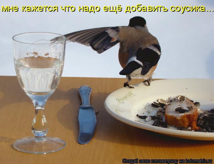 Котоматрица: мне кажется что надо ещё добавить соусика.....