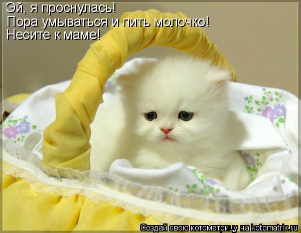 Котоматрица: Эй, я проснулась! Пора умываться и пить молочко! Несите к маме!