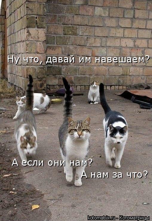 Котоматрица: Ну что, давай им навешаем? А если они нам? А нам за что?