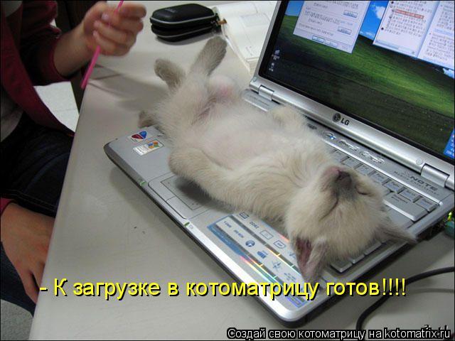 Котоматрица: - К загрузке в котоматрицу готов!!!!