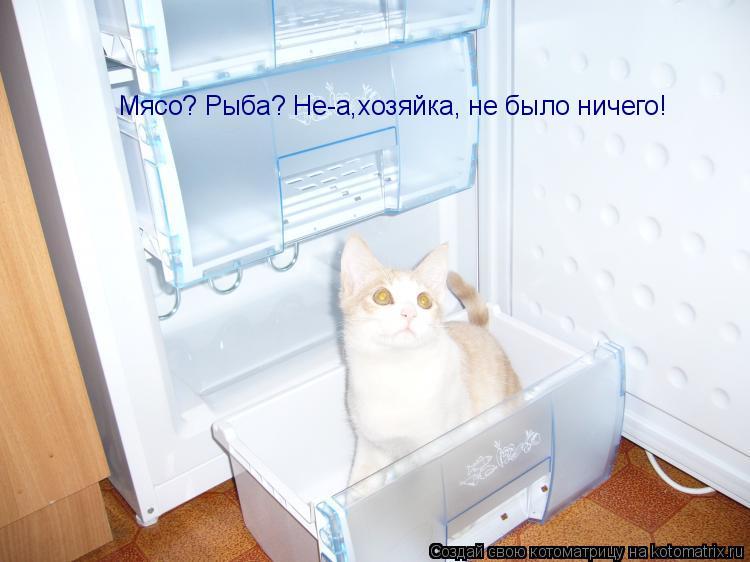 Котоматрица: Мясо? Рыба? Не-а,хозяйка, не было ничего!