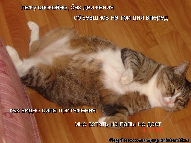 Котоматрица: лежу спокойно, без движения объевшись на три дня вперед как видно сила притяжения мне встать на лапы не дает