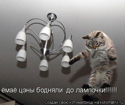 Котоматрица: ёмаё цэны бодняли  до лампочки!!!!!!