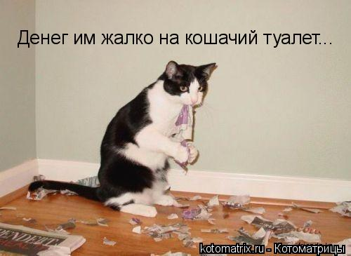 Котоматрица: Денег им жалко на кошачий туалет...