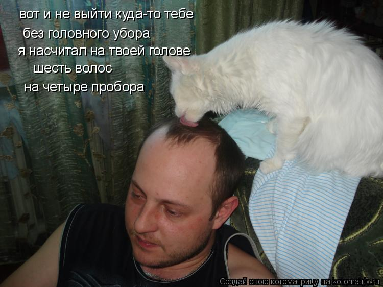 Котоматрица: вот и не выйти куда-то тебе  без головного убора я насчитал на твоей голове шесть волос  на четыре пробора