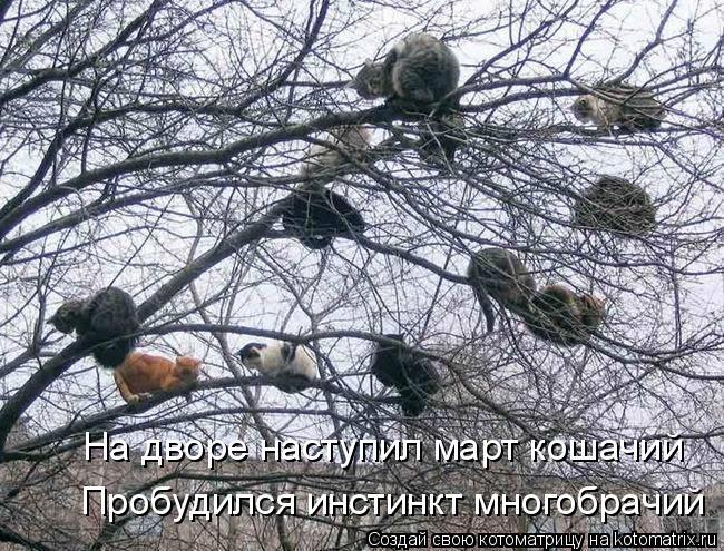 Котоматрица: На дворе наступил март кошачий Пробудился инстинкт многобрачий
