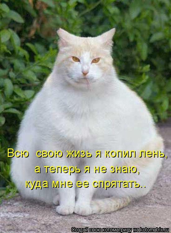 Котоматрица: Всю  свою жизь я копил лень, а теперь я не знаю, куда мне ее спрятать..