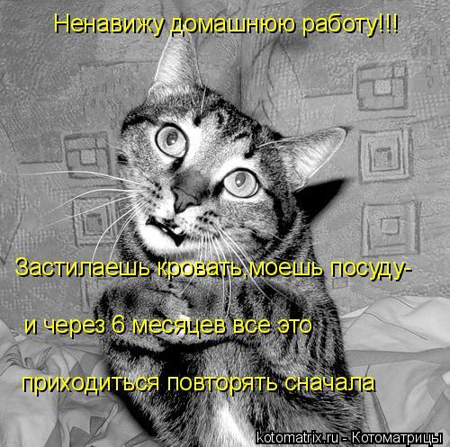 Котоматрица: Ненавижу домашнюю работу!!! Застилаешь кровать,моешь посуду- и через 6 месяцев все это  приходиться повторять сначала