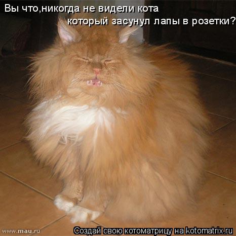 Котоматрица: Вы что,никогда не видели кота  который засунул лапы в розетки?