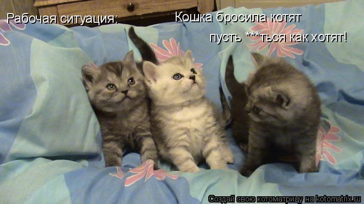 Котоматрица: Кошка бросила котят пусть ***ться как хотят! Рабочая ситуация: