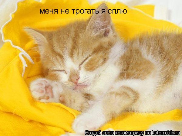 Котоматрица: меня не трогать я сплю
