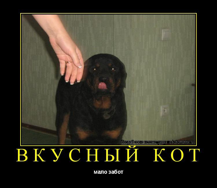 Котоматрица: Вкусный кот мало забот