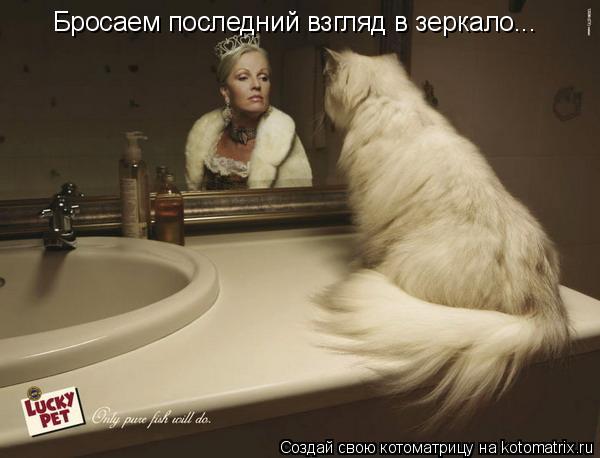 Котоматрица: Бросаем последний взгляд в зеркало...