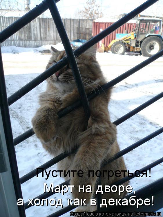 Котоматрица: Пустите погреться! а холод как в декабре! Март на дворе,