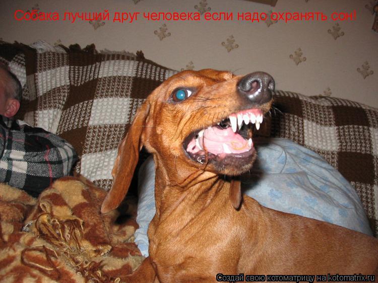 Котоматрица: Собака лучший друг человека если надо охранять сон!