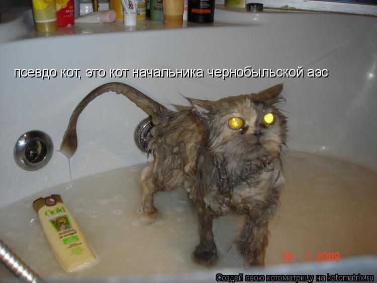 Котоматрица: псевдо кот, это кот начальника чернобыльской аэс