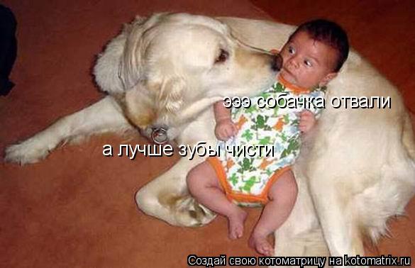 Котоматрица: эээ собачка отвали а лучше зубы чисти