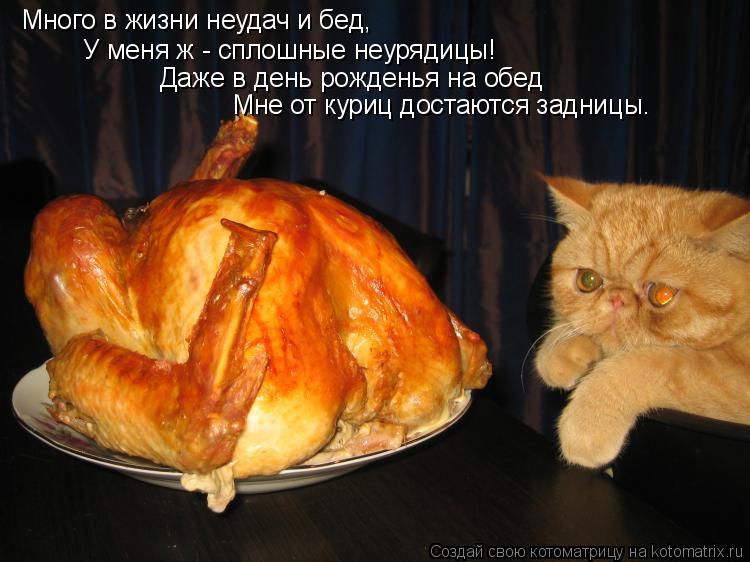 Котоматрица: Много в жизни неудач и бед, У меня ж - сплошные неурядицы! Даже в день рожденья на обед  Мне от куриц достаются задницы…