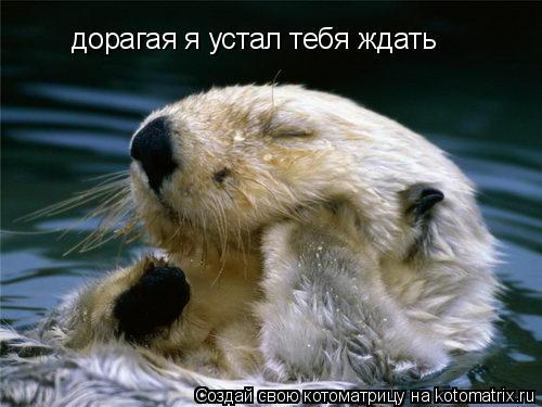 Котоматрица: дорагая я устал тебя ждать