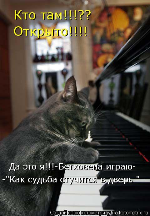 """Котоматрица: Кто там!!!?? Открыто!!!! Да это я!!!-Бетховена играю- -""""Как судьба стучится в дверь """""""