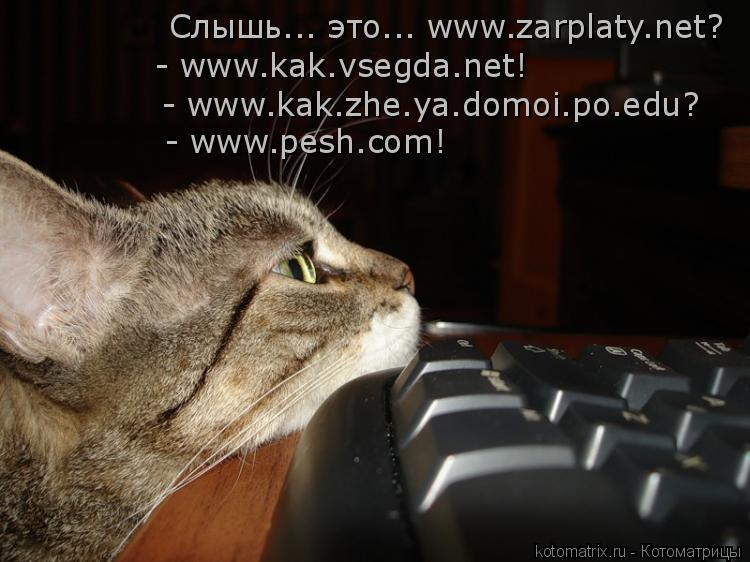 Котоматрица: - www.pesh.com! - www.kak.zhe.ya.domoi.po.edu? - www.kak.vsegda.net! Слышь... это... www.zarplaty.net?