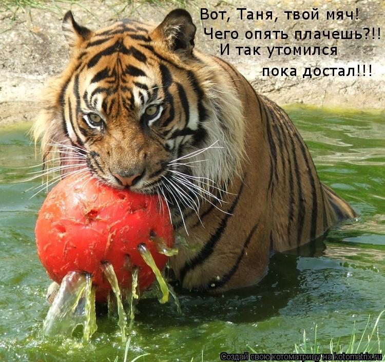 Котоматрица: Вот, Таня, твой мяч! Чего опять плачешь?!! И так утомился пока достал!!!