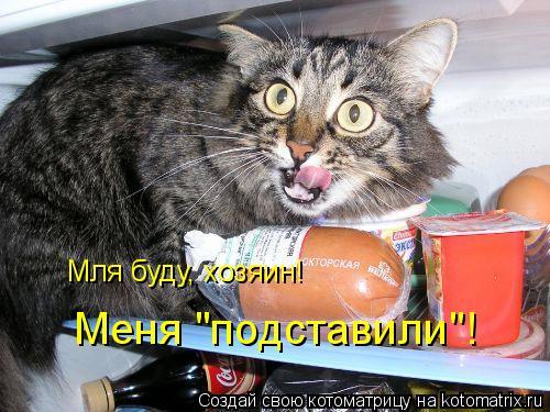 """Котоматрица: Мля буду, хозяин! Меня """"подставили""""!"""