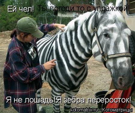 Котоматрица: Ей чел! Ты погоди то с упражкой! Я не лошадь!Я зебра переросток!