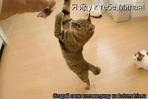Котоматрица: Я иду к тебе,Милая!